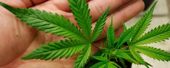 Cannabis Academy