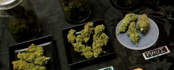 Grow Cannabis Legally